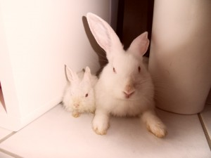 Aysha e Ollie