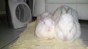 Aysha e Flopinho